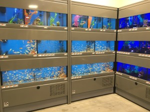 The store will have live fish, birds, rodents and reptiles for its customers to purchase.(Photos by Ashley Ford, Texan News)
